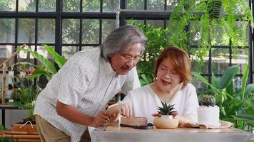 Old Asian Couple Relaxing And Planting Cactus