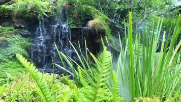 Waterfall with Mist and Tropical Fern Moss Garden video