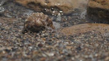 Sea shell on the seashore video