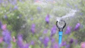 aspersor de água regando