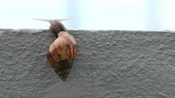 caracol trepa por una pared.