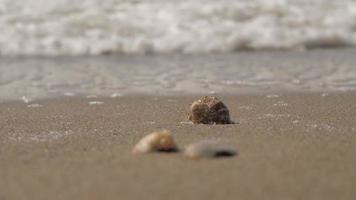 ondas do mar cobrem conchas do mar