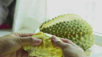 mano de fruta fresca de durian arrancar lentamente