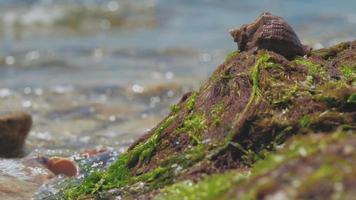 Seashell and seaweed on the seashore