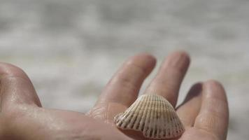 Seashell in male hand