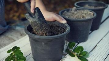 Preparation of Soil in Pots for Planting Trees video