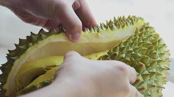 Fresh Durian fruit hand peel of shell cover to show inside video
