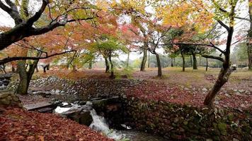folhagem de outono em nara park japão