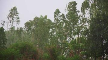 tormenta de viento sobre los árboles video
