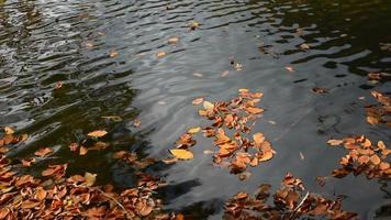 hojas de otoño amarillas en un lago