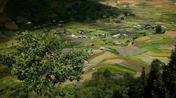 lindos campos agrícolas, terraços com arrozais, sapa, vietnã video
