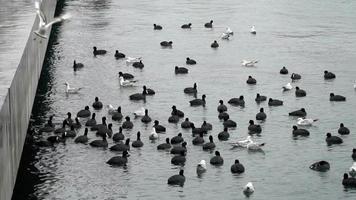 galeirões e gaivotas em câmera lenta na superfície do mar