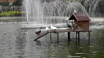 eenden in het Yildiz-park video
