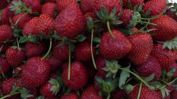 Fresh Natural Strawberry