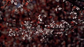 flores rojas y blancas en un árbol
