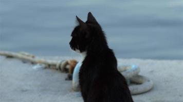 Tame Black White Cute Cat in Marina video