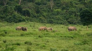 incrível do grupo de elefantes asiáticos
