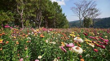 flor de paja cubierta de hierba