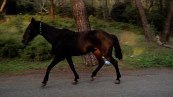 cavalos pretos e brancos correndo livremente