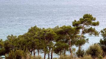 vue sur les pins et les vagues de l'océan