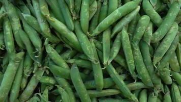 Fresh Natural Green Peas