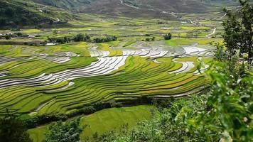 campos de arroz em socalcos em mu cang chai, sapa, vietnã