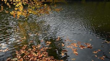 Yellow Autumn Leaves on Water