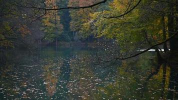 hojas de otoño amarillas cayendo sobre un lago video