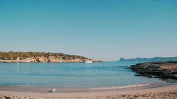 Cala Bassa Beach, Ibiza Island, Summer Day video
