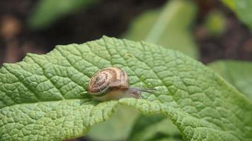 Little snail is on a leaf