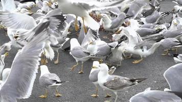 bando de gaivotas no chão