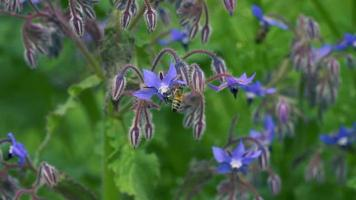 Blue Wildflowers and Bees