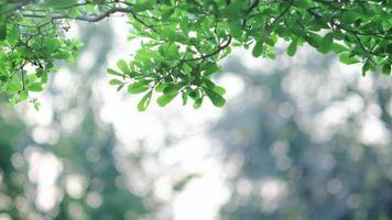 vento soprando folhas verdes em um galho de árvore.