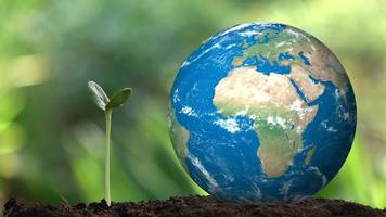 Seedling and Planet Earth