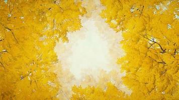 fondo animado de hojas de otoño