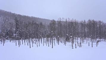 bosque de invierno en japón