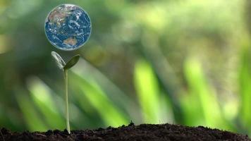 pequeña planta y planeta tierra giratorio. video