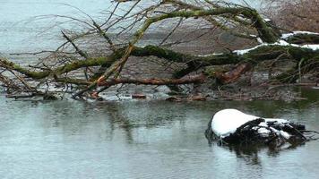 galho de árvore seco e água do lago no inverno