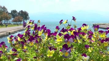 flores roxas e amarelas e o mar