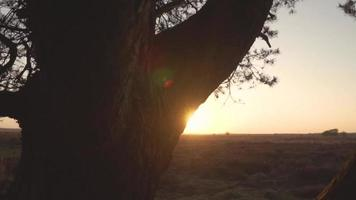 Sunset in nature from behind a tree