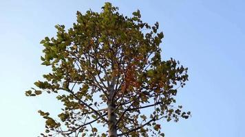 queda de árvore movendo-se em câmera lenta