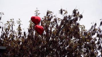 globos en forma de corazón rojo en la parte superior de un árbol