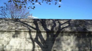 la sombra del árbol en un muro de piedra video