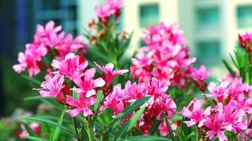 bouquet de fleurs roses en fleurs