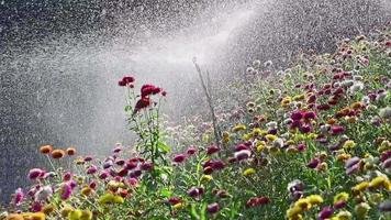 Watering Flowers Slow Motion