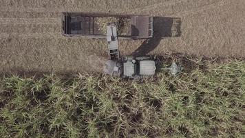 máquina de cosecha de caña de azúcar. video