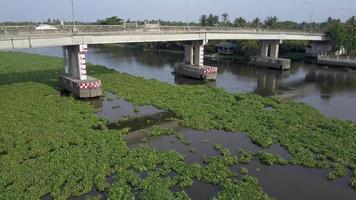 Water hyacinth crisis