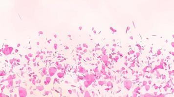 folhas de sakura rosa flutuando no ar video
