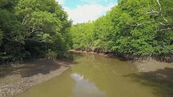 passando por um mangue, Tailândia