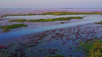 lago de loto rojo, udon thani, tailandia